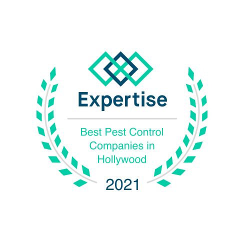 Best Pest Control Company in Hollywood, FL!